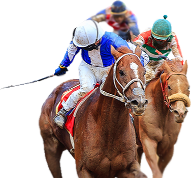 Todays racing betting odds live online sports betting